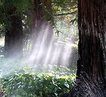 Mystical Moment with the Redwoods by Maurine Huang