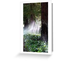 Mystical Moment with the Redwoods Greeting Card