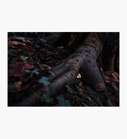 Roots and Earth Photographic Print