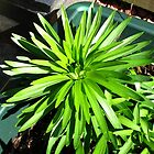 Green and Gorgeous - Sunlit Lily Leaves by BlueMoonRose