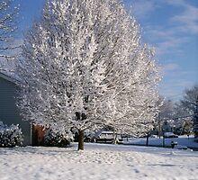 Snowy Tree by b-chaney
