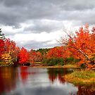 Gorgeous Maine Foliage by Judith Hayes
