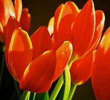 Sunlit tulips by Ánika Warren-Smith