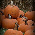 Pumpkins Everywhere by PicsbyJody