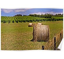Hay Bales and Vines - Coombend Vineyard, Tasmania Poster
