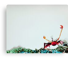Crab Ready for a Fight Canvas Print