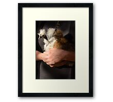 Hands holding baby chickens Framed Print
