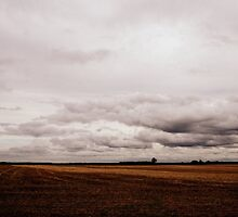 Grey and Gold English Landscape Field Scene by Emilie Crouch