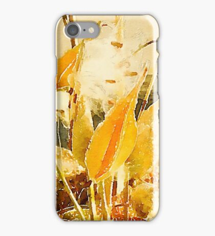 Milkweed in the autumn breeze iPhone Case/Skin