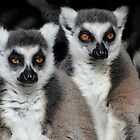 Life Is Serious - Ring-tailed Lemurs by Margaret Saheed