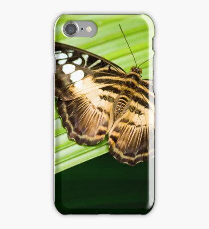 Asian Clipper iPhone Case/Skin