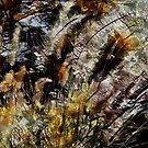 Pampas Grass Abstract by Dana Roper