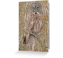 Camouflage-an owl's best friend Greeting Card