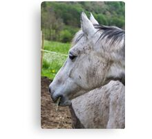 horse in the farm Canvas Print