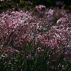 grass - hierba by Bernhard Matejka