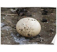 ostrich egg Poster