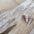 Shells and driftwood by artsandsoul