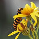 Yellow and stripes by Inese