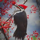 Pileated Woodpecker by shutterbug2010