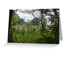 forest landscape Greeting Card