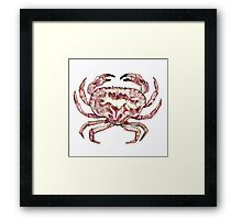 Colour Crab  Framed Print