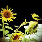 Sunflowers and Finches - 6 of 9 by Rosemary Sobiera