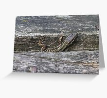 lizard on the river Greeting Card
