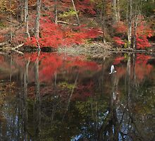 Autumn Glass by Kenneth Hoffman