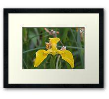 flower in the forest Framed Print
