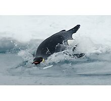 Diving Emperor Penguin Photographic Print