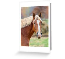 Horse Looks Your Way Greeting Card