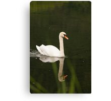 swan on the lake Canvas Print