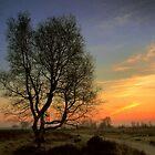 My Fairytree by Sunrise by ienemien