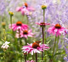 Echinacea nectar by Zoe Power