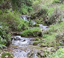 stream in the forest by spetenfia