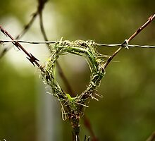 If life hands you razor wire - build a nest on it by Graeme Mockler