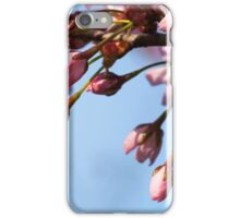 Cherry Tree Buds iPhone Case/Skin