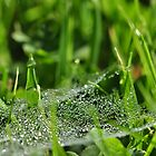 Bejewelled web by Heather Thorsen