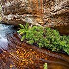 Billiwing Gorge by Travis Easton