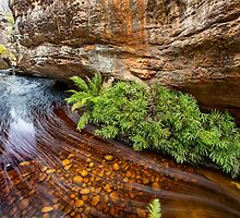 Billiwing Gorge by Travis Easton