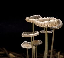 Little Shrooms by Lynn Gedeon