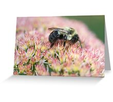 Bumble Nirvana Greeting Card