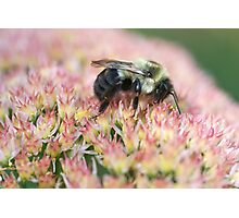 Bumble Nirvana Photographic Print