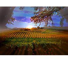 Colorful Fall Vineyard Photographic Print