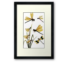 Dragonflies couple male/female amazing retro vintage design! Framed Print