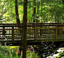 The Quiet Bridge by Scott Mitchell