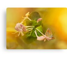 Phengaris teleius butterfly on honey suckle flowers Canvas Print