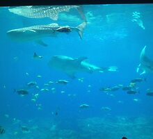 Whale sharks by glittermaster