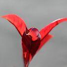 Phoenix by Paul Pasco