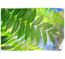green leaves on fall background Poster